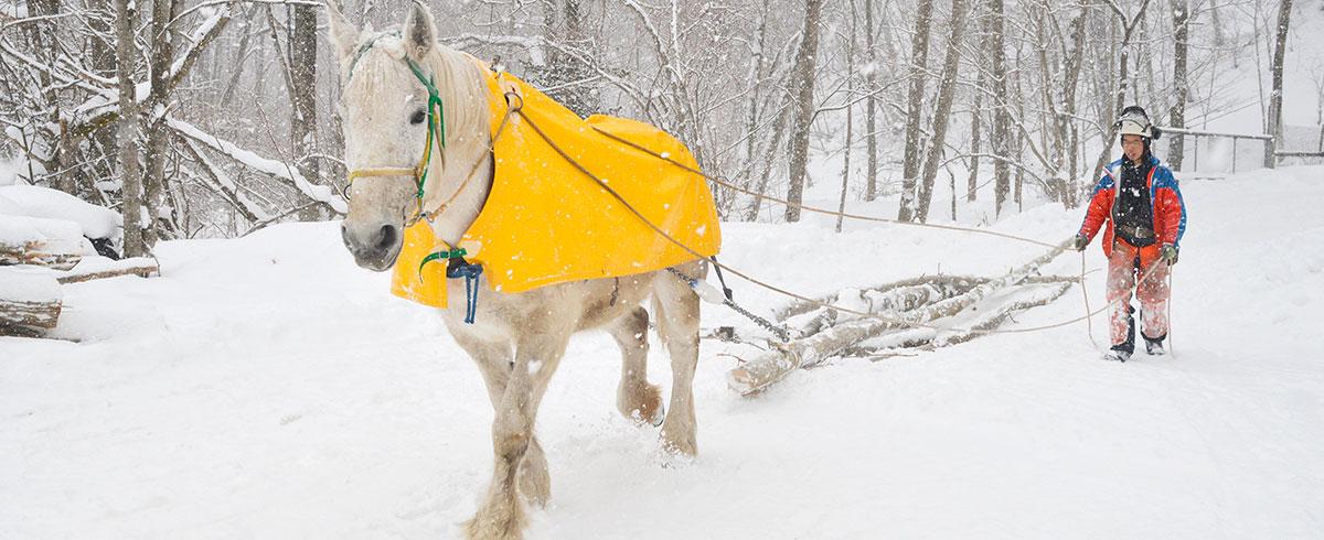 間伐材を運ぶ馬搬